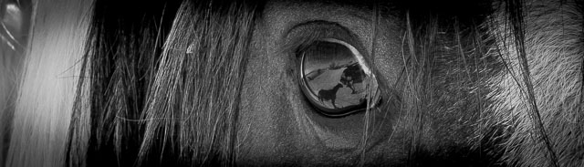 Horsefeathers, closeup of wild horse at Cold Creek NV, October 22, 2014