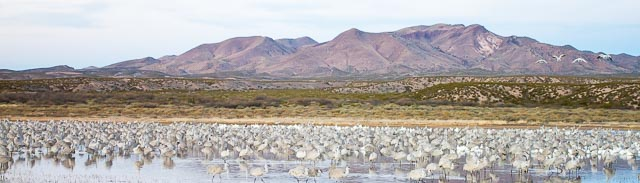 Birds at the Pond, Bosque del Apache National Wildlife Refuge, San Antonio NM, December 22, 2014