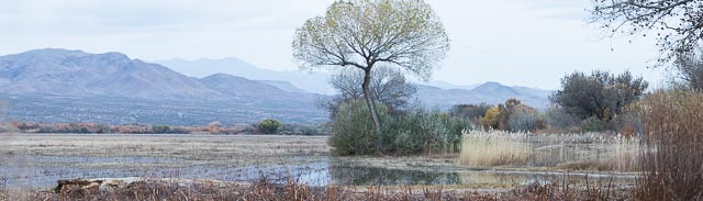Bosque tree and meadow panorama