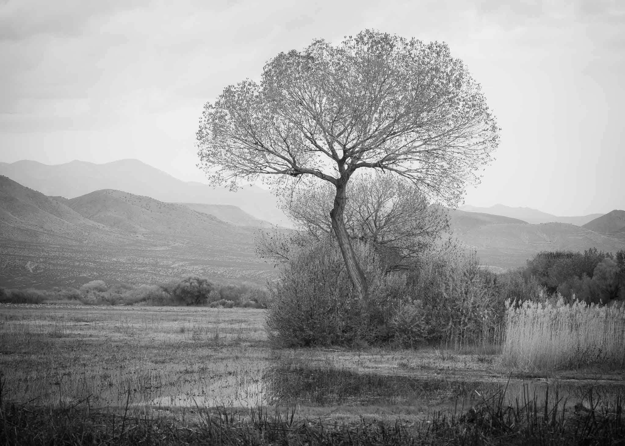 Tree at Bosque del Apache National Wildlife Refuge, San Antonio NM, November 15, 2015
